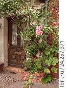 Купить «Входная дверь старинного дома и цветущий куст в Люнебурге, Германия», фото № 24257371, снято 8 августа 2015 г. (c) Наталья Николаева / Фотобанк Лори