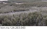 Купить «Зимний сосновый лес и болота в Карелии, полет», видеоролик № 24263043, снято 11 ноября 2016 г. (c) Кекяляйнен Андрей / Фотобанк Лори