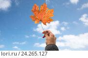 Купить «close up of hand with autumn maple leaf over sky», фото № 24265127, снято 12 октября 2016 г. (c) Syda Productions / Фотобанк Лори