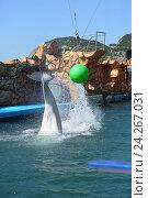 Купить «Анапский Утришский дельфинарий. Шоу морских млекопитающих», фото № 24267031, снято 6 июня 2015 г. (c) Игорь Архипов / Фотобанк Лори