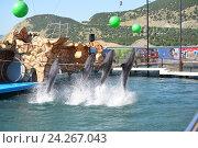 Купить «Анапский Утришский дельфинарий. Шоу морских млекопитающих», фото № 24267043, снято 6 июня 2015 г. (c) Игорь Архипов / Фотобанк Лори