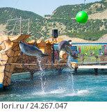 Купить «Анапский Утришский дельфинарий. Шоу морских млекопитающих», фото № 24267047, снято 6 июня 2015 г. (c) Игорь Архипов / Фотобанк Лори