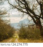 Осенний лесной пейзаж с видом на гору Развалка. Стоковое фото, фотограф Игорь Ясинский / Фотобанк Лори