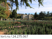 Купить «Крым. Никитский ботанический сад», эксклюзивное фото № 24275067, снято 24 октября 2016 г. (c) Яна Королёва / Фотобанк Лори