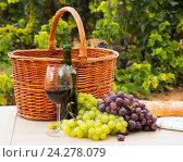 Купить «grape plants and vine», фото № 24278079, снято 29 января 2020 г. (c) Яков Филимонов / Фотобанк Лори