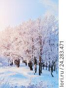 Купить «Winter landscape with falling snow- winter wonderland with winter snowfall and sunlight», фото № 24283471, снято 23 марта 2019 г. (c) Зезелина Марина / Фотобанк Лори