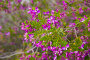 polygala myrtifolia blossom, фото № 24296955, снято 1 декабря 2016 г. (c) Яков Филимонов / Фотобанк Лори