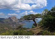 Купить «Красивый пейзаж, крымская сосна на фоне гор, неба и облаков, море вдали», эксклюзивное фото № 24300143, снято 1 мая 2016 г. (c) Яна Королёва / Фотобанк Лори