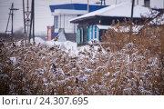 Купить «Заснеженный болотный камыш», фото № 24307695, снято 11 ноября 2016 г. (c) Павел Сапожников / Фотобанк Лори