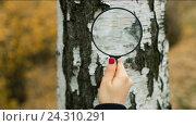 Купить «Женщина с увеличительным стеклом, изучение дерева», видеоролик № 24310291, снято 7 января 2005 г. (c) Илья Шаматура / Фотобанк Лори