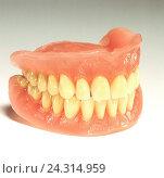 Купить «Denture, prosthesis, cogs, medicine, dentistry, cog technology, full prosthesis, upper jaw, lower jaw», фото № 24314959, снято 29 января 2002 г. (c) mauritius images / Фотобанк Лори