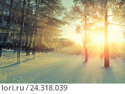 Купить «Winter landscape -winter forest nature under bright evening sunlight with frosty trees», фото № 24318039, снято 27 ноября 2010 г. (c) Зезелина Марина / Фотобанк Лори