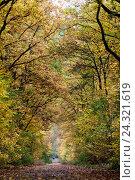 Купить «Forest path in fall,», фото № 24321619, снято 23 апреля 2018 г. (c) mauritius images / Фотобанк Лори