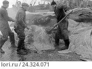 Купить «Männer arbeiten sich durch die Fettschichten eines erlegten Wals an Bord eines Schiffs der deutschen Walfangflotte, 1930er Jahre. Men processing the fat...», фото № 24324071, снято 27 мая 2018 г. (c) mauritius images / Фотобанк Лори