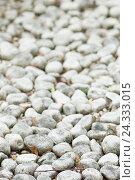 Купить «Pebbles, detailed view», фото № 24333015, снято 27 июля 2007 г. (c) mauritius images / Фотобанк Лори