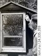Купить «Ein Imker zeigt eine Wabe mit einem Bienenvolk, Deutschland 1930er Jahre. A bee keeper presenting a honeycomb with a bee population, Germany 1930s», фото № 24335359, снято 17 августа 2018 г. (c) mauritius images / Фотобанк Лори