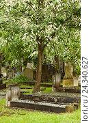 Купить «Cemetery, gravestone, memory, trees», фото № 24340627, снято 21 августа 2018 г. (c) mauritius images / Фотобанк Лори