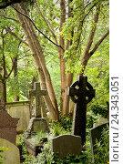 Купить «Cemetery, gravestone, memory, trees», фото № 24343051, снято 20 августа 2018 г. (c) mauritius images / Фотобанк Лори