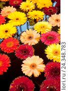 Купить «Plant, flowers, gerbera, water», фото № 24348783, снято 16 августа 2018 г. (c) mauritius images / Фотобанк Лори
