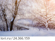 Купить «Winter landscape in vintage tones - winter frosty trees and old snowy winter bridge in the winter park», фото № 24366159, снято 19 июня 2019 г. (c) Зезелина Марина / Фотобанк Лори