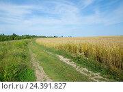 Купить «Сельский пейзаж с дорогой вдоль ржаного поля», эксклюзивное фото № 24391827, снято 16 июля 2016 г. (c) Елена Коромыслова / Фотобанк Лори