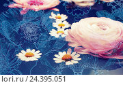 Купить «photograph, conceptual layer work of buttercup, daisy and anemone blossoms in water,», фото № 24395051, снято 22 июля 2018 г. (c) mauritius images / Фотобанк Лори