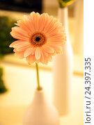 Купить «Flower, vase, orange, gerbera,», фото № 24397335, снято 17 августа 2018 г. (c) mauritius images / Фотобанк Лори