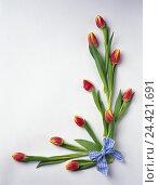 Купить «Easter, Still life, framing, tulips, loop Easter, Still life, decoration, decorates, flowers, cut flowers, red-yellow, substance loop, blue-white, bezel...», фото № 24421691, снято 27 марта 2002 г. (c) mauritius images / Фотобанк Лори