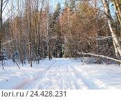 Зимний лес, снег, лыжня, солнечный день. Стоковое фото, фотограф Alex Chernikov / Фотобанк Лори