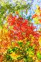 Осенний пейзаж. Красные листья рябины в контровом освещении, фото № 24429215, снято 24 сентября 2016 г. (c) Евгений Мухортов / Фотобанк Лори