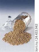 Купить «Soy beans, glycines max., soya beans soy, soy bean, soy beans, legumes, semens, glass, glass case, product photography, studio», фото № 24433943, снято 11 мая 2005 г. (c) mauritius images / Фотобанк Лори
