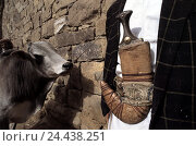 Купить «Yemen, outside wall, man, detail, belt, crooked dagger Janbiya, tree bark, the Near East, peninsula Arabia, Arabian peninsula, Yemen, Al-Djumhurijja al...», фото № 24438251, снято 19 апреля 2004 г. (c) mauritius images / Фотобанк Лори
