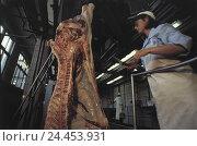 Купить «Czech Republic, Studena, slaughterhouse, butcher, pigs, disassemble Czechoslovakia, butcher's shop, conveyor belt, slaughter-house, Schlachterei, meat...», фото № 24453931, снято 31 мая 2002 г. (c) mauritius images / Фотобанк Лори