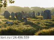Купить «France, Brittany, Carnac, alingnments, menhirs, haze, morning light,», фото № 24496559, снято 22 июля 2018 г. (c) mauritius images / Фотобанк Лори