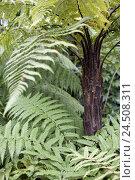 Купить «Northern Ireland, Belfast, botanical garden, palm house, plants,», фото № 24508311, снято 17 декабря 2009 г. (c) mauritius images / Фотобанк Лори