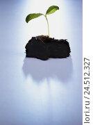 Купить «Ground, Keimling, growth, Ti7, plant, young, shoot, instinct, embryo, seedling, nature, icon, conception, growth, grow, development, force, starch, will...», фото № 24512327, снято 23 марта 2004 г. (c) mauritius images / Фотобанк Лори