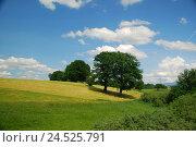 Купить «Summer scenery, meadows, trees, summer heavens,», фото № 24525791, снято 13 апреля 2010 г. (c) mauritius images / Фотобанк Лори