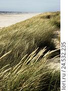 Купить «Beach-dune, summers, beach, nature, dune, beach-oat, grass, vegetation, breezy, wind, heavens, cloudless, outside, human-empty, wideness, distance, view, sea, North sea, longing,», фото № 24532235, снято 18 сентября 2018 г. (c) mauritius images / Фотобанк Лори