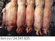 Купить «Butcher shop, pigs, hang, headlong, slaughter, deadly, bloody, meat processing, meat, benefit animal, animal for slaughter, Studena,», фото № 24541835, снято 6 ноября 2008 г. (c) mauritius images / Фотобанк Лори