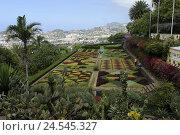 Купить «Portugal, island Madeira, Funchal, botanical garden,», фото № 24545327, снято 15 июня 2009 г. (c) mauritius images / Фотобанк Лори