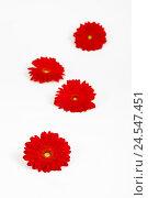 Купить «Red gerbera blossoms on white subsoil, selective sharpness, studio,», фото № 24547451, снято 17 августа 2018 г. (c) mauritius images / Фотобанк Лори
