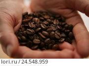 Купить «Hands, coffee beans, hold, detail, coffee, beans, roast coffee, roasted, roast-freshly, brown, aroma, odour, coffee odour, blur,», фото № 24548959, снято 2 июня 2008 г. (c) mauritius images / Фотобанк Лори