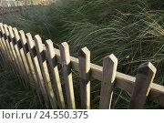 Купить «Dune, dune grass, wooden paling,», фото № 24550375, снято 15 октября 2007 г. (c) mauritius images / Фотобанк Лори