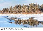 Зимний сосновый лес отражается в не-замерзшей реке декабрьским солнечным днем, фото № 24550927, снято 11 декабря 2016 г. (c) Виктория Катьянова / Фотобанк Лори