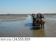 Купить «Germany, Schleswig - Holstein, north frieze country, watt, low tide, carriage journey,», фото № 24555859, снято 29 сентября 2009 г. (c) mauritius images / Фотобанк Лори