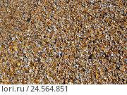 Песок ракушечник. Стоковое фото, фотограф Александр Ледовской / Фотобанк Лори