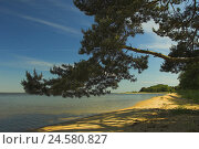 Купить «Summer Idyll, Kurisches lagoon, Juodkrante, national park health resort broad bay bar, Lithuania,», фото № 24580827, снято 19 января 2018 г. (c) mauritius images / Фотобанк Лори
