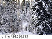 Зимняя тайга. Стоковая иллюстрация, иллюстратор Владимир Мигонькин / Фотобанк Лори