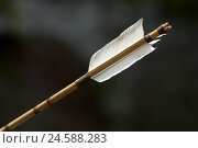 Купить «Arrow, floor, shaft, feathers, cord, Nocke, white, black,», фото № 24588283, снято 16 ноября 2007 г. (c) mauritius images / Фотобанк Лори