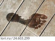 Купить «Wooden floor, footprint, wet, planking floor, Wooden boards, boards, impression, footprint, track, icon, summer, heat, orthopaedics,», фото № 24603299, снято 21 мая 2018 г. (c) mauritius images / Фотобанк Лори